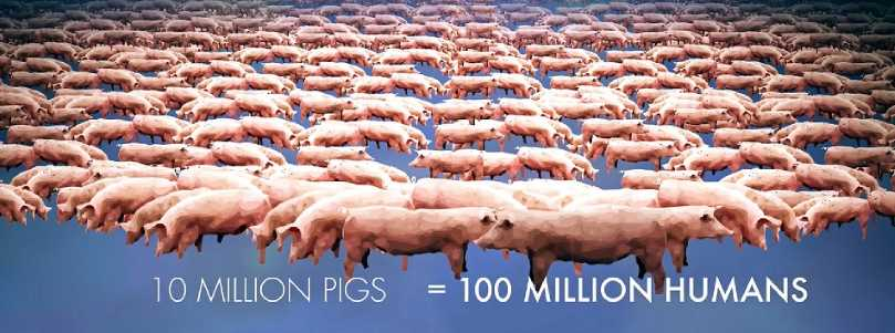 "The environmental waste produced by pigs in ""What The Health"""